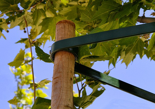 Powder-coated tree stake brace with welded rings on wood stake